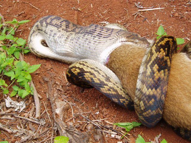snakeandroo2.jpg