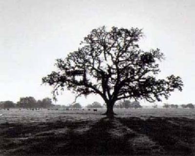 ¿De qué árbol te caíste al nacer?