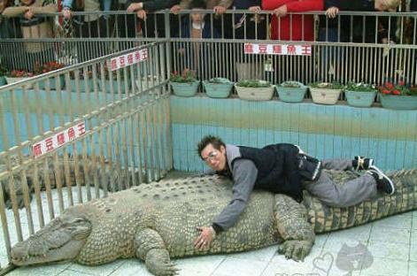 La mejor postura para tener sexo con un cocodrilo