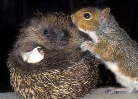 Entre los animales también hay buenos amigos