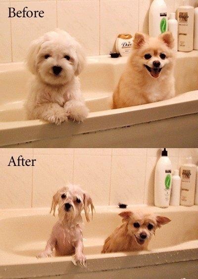 Cómo duchar y bañar a un perro