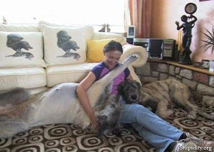 Fotografías de perros gigantes
