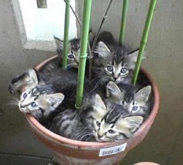 Una planta de gatos