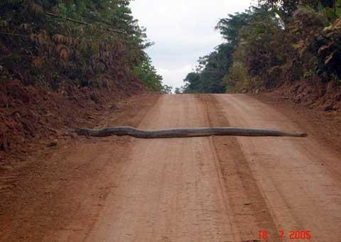 Una serpiente enorme
