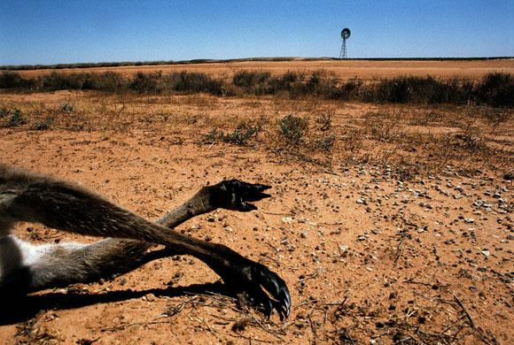 Fotografías sobre los efectos del calentamiento global de la atmósfera