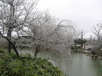 Fotografías del después de una helada en China