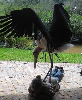 El pájaro asesino