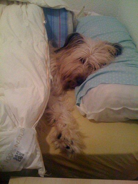 Una perra en la cama