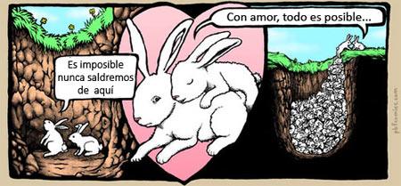 Como conejos