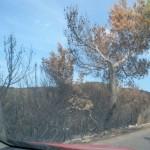 Fotografías de bosques quemados en Ibiza