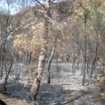 Fotografías de bosques quemados en Ibiza en el año 20120