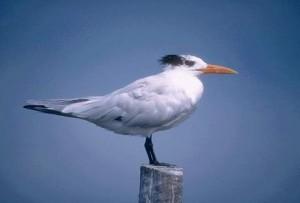 Aves en la mitología griega