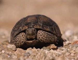 tortugas se divorcian