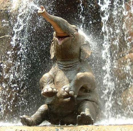 Un elefante juguetón con muchas ganas de fastidiar a alguien