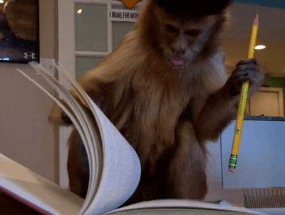 Kasey el mono que ayuda a un joven en su recuperación