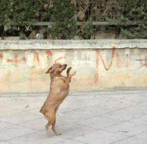 Una perra con mucho talendo