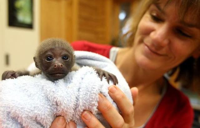 Mono bebe arropado