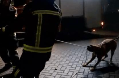 Un perro ayudando a los bomberos
