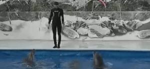 Delfín entrenado para estar fuera del agua