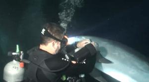 El delfín que pide ayuda a unos buzos