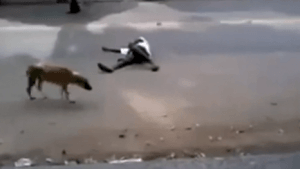 El ingenio de unos perros cuidando de su dueño