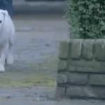 El perro con complejo de coche