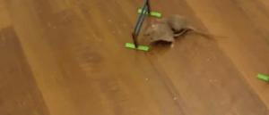 Ratones muy inteligentes