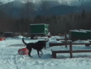 Un perro solidario en momentos cruciales