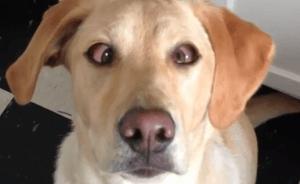 El perro que cruza los ojos