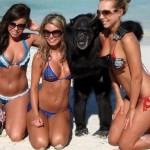 Un mono y tres chicas en la playa