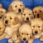 Razones por las que merece la pena cuidar a tu perro