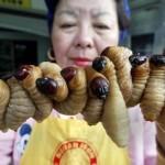 Top 10 de las comidas más asquerosas del mundo