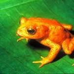 El top 10 animales extintos recientemente