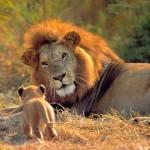Top 10 acerca de cosas que no sabias de los animales