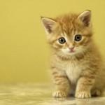 Top 11 de más curiosidades sobre los gatos