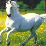Top 13 de algunas curiosidades sobre los caballos que te sorprenderán