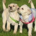 Top 11 de las curiosidades de los perros que no conocías
