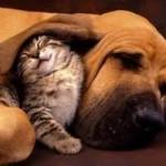 Top 13 de algunas increíbles curiosidades acerca de los animales