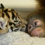 Top 13 de las nuevas curiosidades del mundo animal parte 1