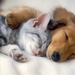 Top 10 de las curiosidades sobre los animales que no conocías