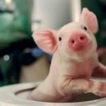 Top 14 demás curiosidades del mundo animal parte 3