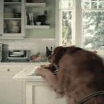 El vídeo del perro muy astuto
