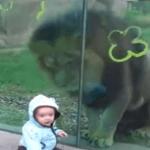 Es curioso pensar en un Bebé que desafía la furia de un león