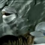 La amistad entre un gato y un delfín