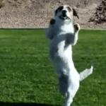 Un perro divertido que proporciona muchas aventuras