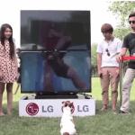 Divertido vídeo donde los perros también miran televisión en 3D