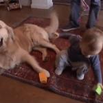 Golden Retriever y los bebés
