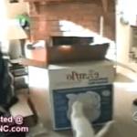 Vídeos de gatos graciosos