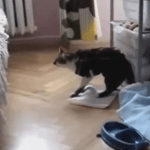Vídeos graciosos de animales