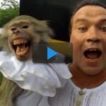 El mono imitador